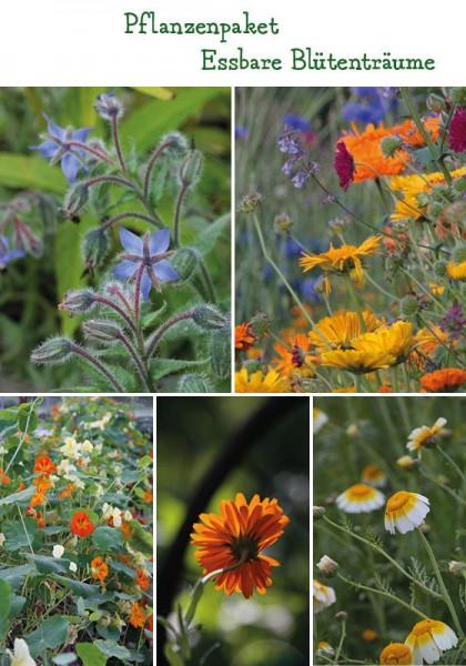Essbare Blüten Pflanzenpaket - 4 Pflanzen