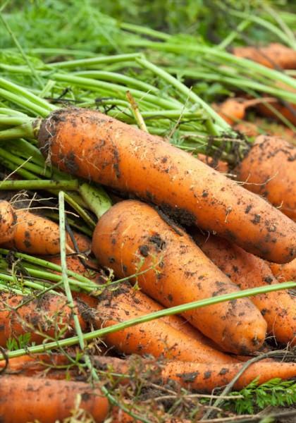 Geschenkgutschein Motiv Gemüse