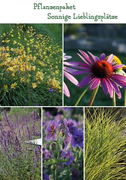 Lieblingsplätze Sonne - 8 Pflanzen