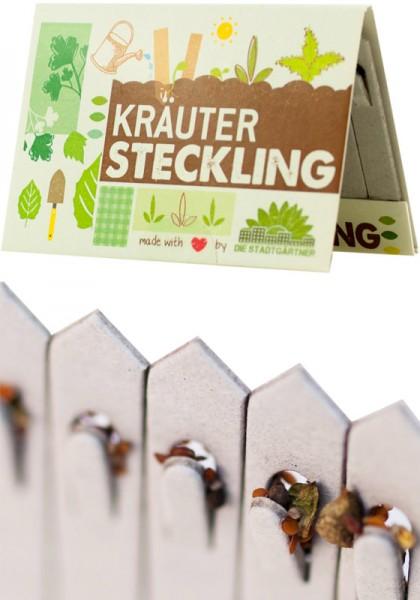Steckling Kräuter