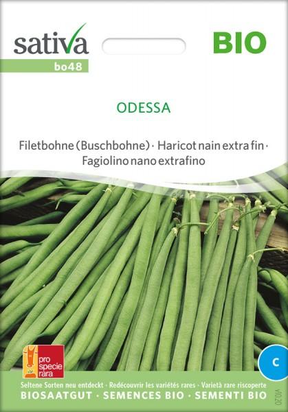 Filetbohne (Buschbohne) Odessa