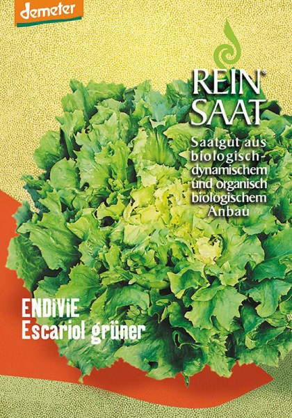 Endivie Escariol grüner