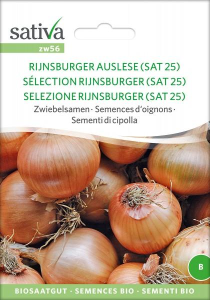 Zwiebel Rijnsburger Auslese (SAT25)