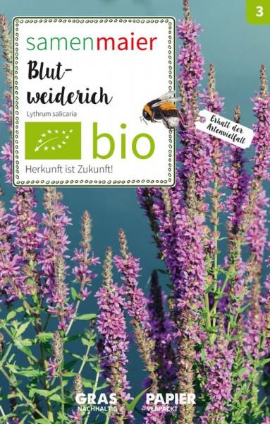 Wildblume Blut-Weiderich