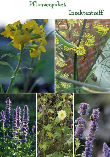 Bienen- und Wildbienen-Futter Pflanzenpaket - 8 Pflanzen