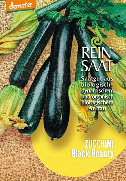 Zucchini Black Beauty