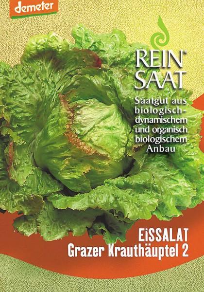 Eissalat Grazer Krauthäuptel 2