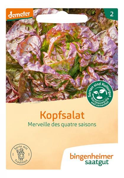 Kopfsalat Merveille des quatre saisons