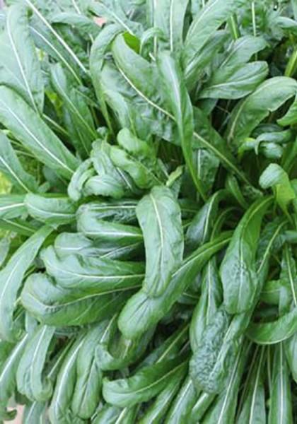 Asia-Gemüse Mibuna