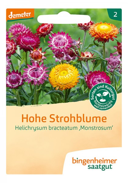 Strohblumen Hohe