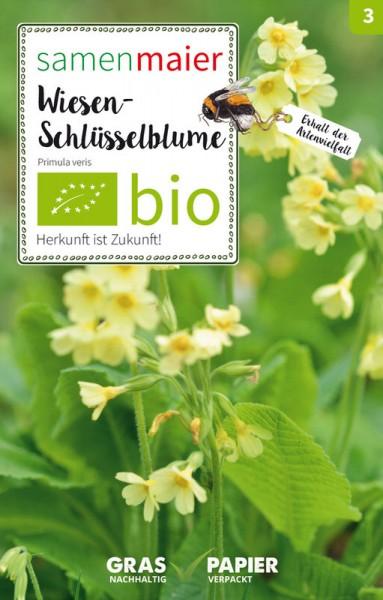 Wildblume Wiesen-Schlüsselblume