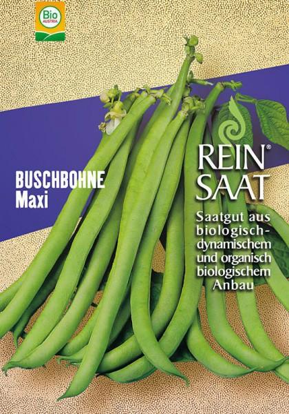 Buschbohnen Maxi