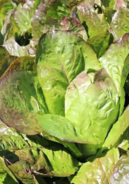 Romanasalat grün-rot