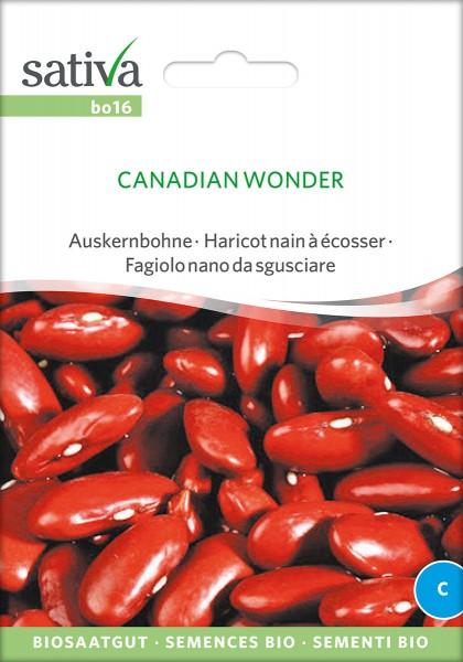 Auskernbohne / Kidneybohnen Canadian Wonder