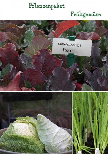 Frühgemüse - 15 Pflanzen