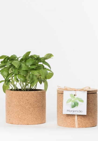 Grow Cork Basilikum