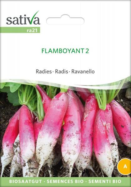 Radieschen Flamboyant 2