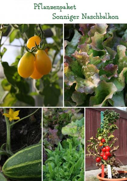 Naschbalkon - 6 Pflanzen