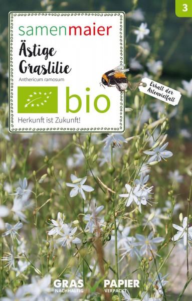 Wildblume Ästige Graslilie