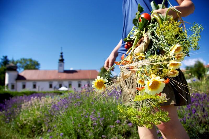 media/image/Gartenfest_Presse_ARCHENOAH_Schiltern.jpg