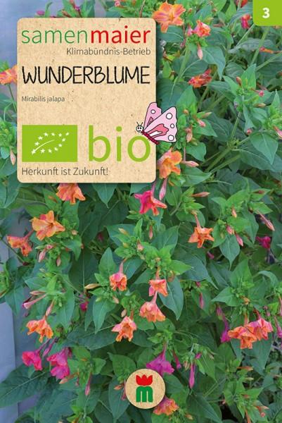 BIO Wunderblume