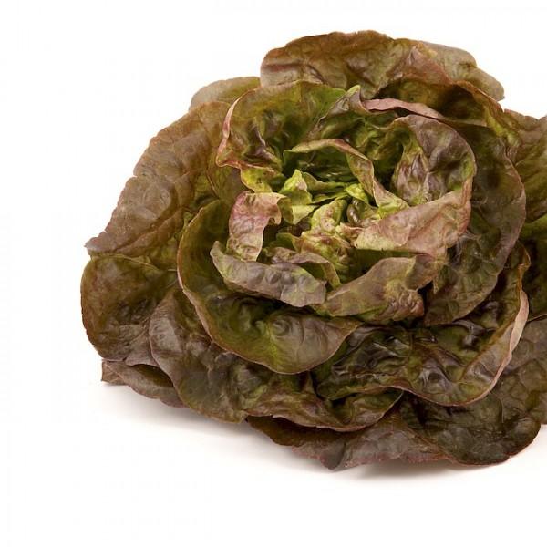 Häuptlsalat / Kopfsalat 'Roter Butterhäuptl'