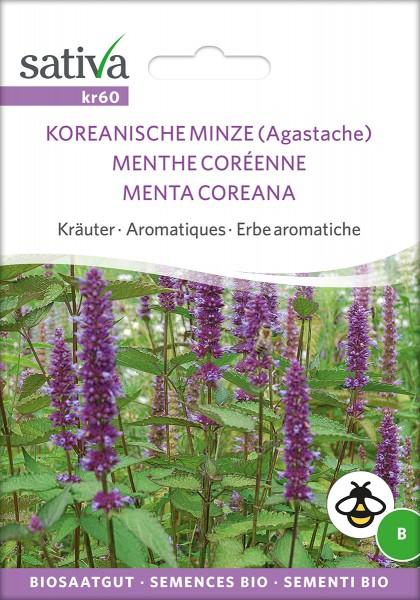 Koreanische Minze