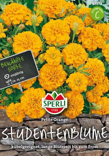 Studentenblumen Petite Orange