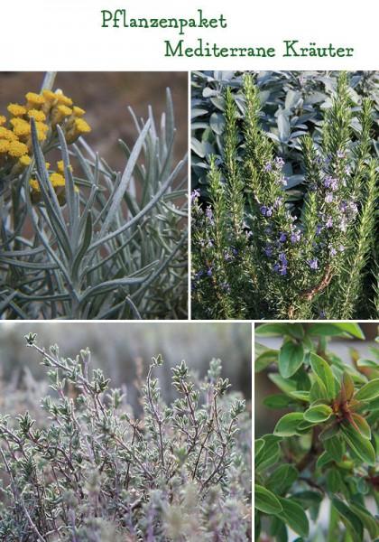 Mediterrane Kräuter Pflanzenpaket - 4 Pflanzen