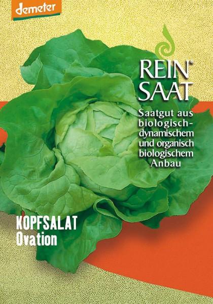 Kopfsalat Ovation