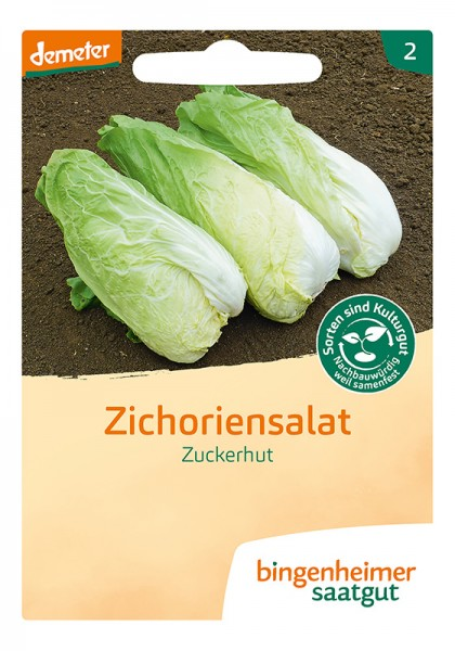 Zichoriensalat Zuckerhut