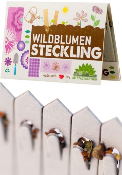 Steckling Wildblumen