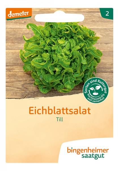 Eichblattsalat Till