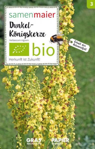 Wildblume Dunkel-Königskerze
