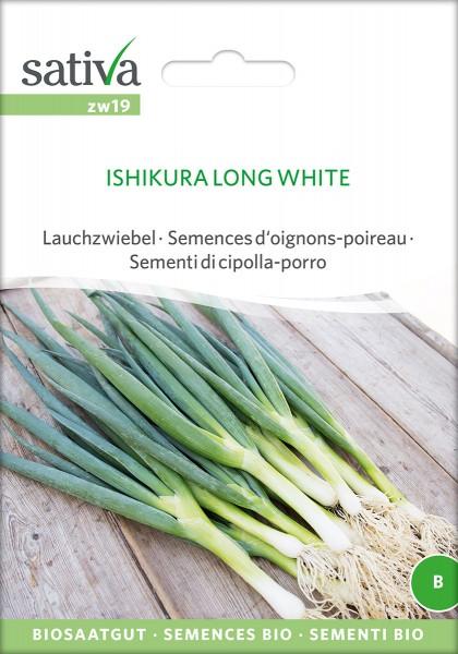 Zwiebel Long White Ishikura
