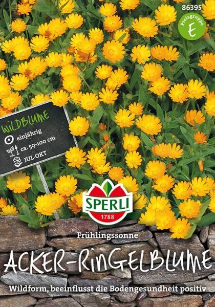 Acker-Ringelblumen Frühlingssonne