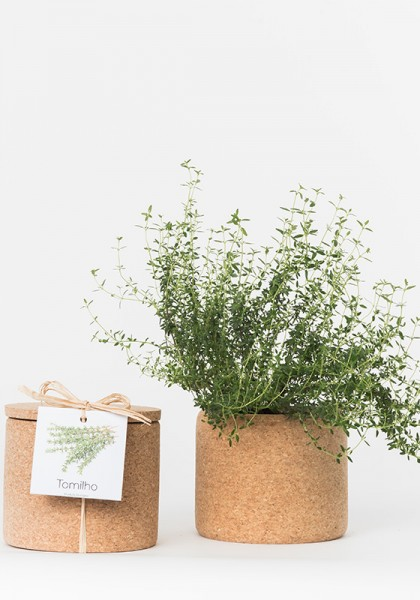 Grow Cork Thymian