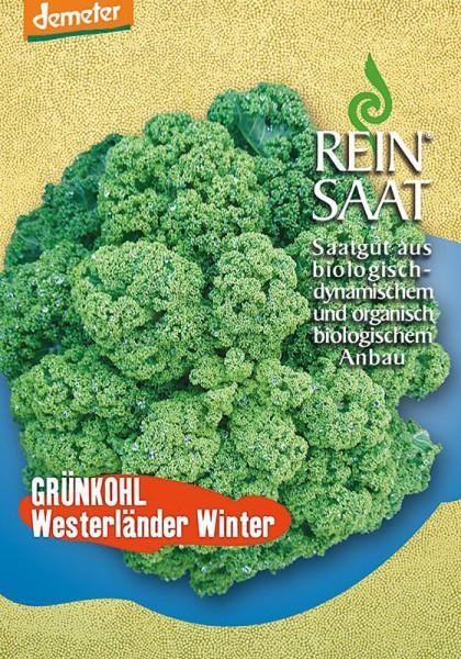 Grünkohl Westerländer Winter