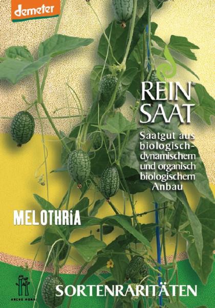 Melothria