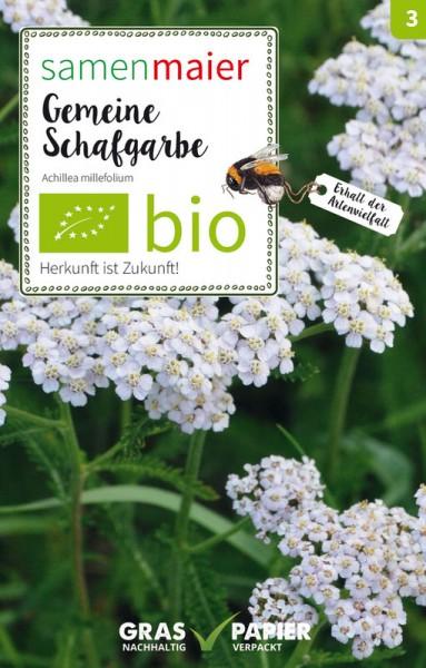 Wildblume Gemeine Schafgarbe