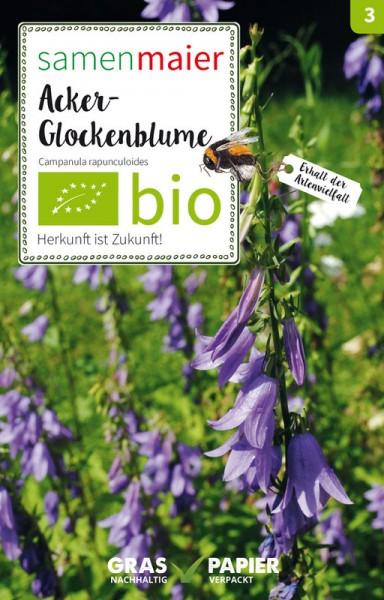 Wildblume Acker-Glockenblume
