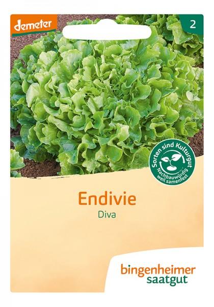 Endivie Diva