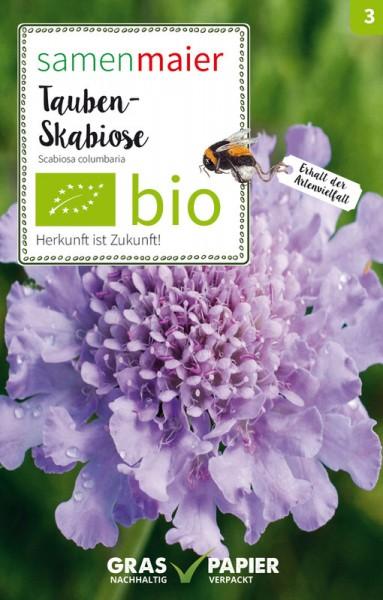 Wildblume Tauben-Skabiose