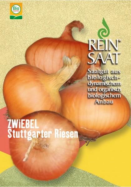 Zwiebeln Stuttgarter Riesen