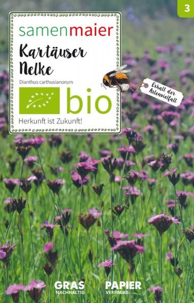 Wildblume Karthäuser Nelke