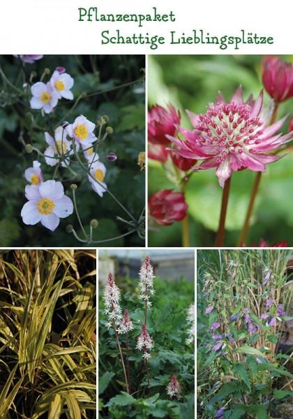Lieblingsplatze Schatten 6 12 Pflanzen Von Herb S Bioland Gartnerei