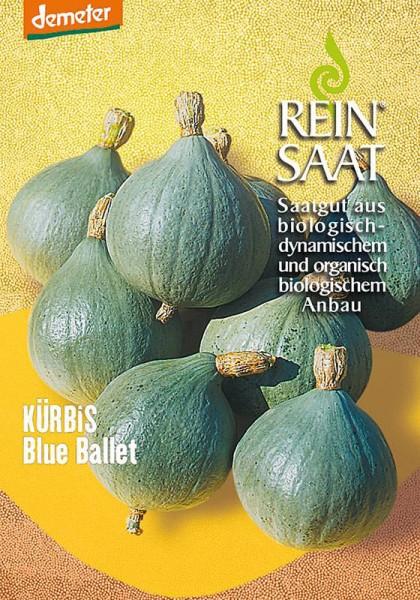 Kürbis Blue Ballet