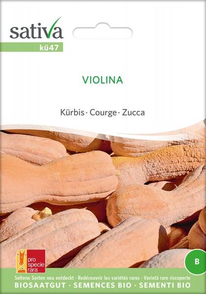 Kürbis Violina
