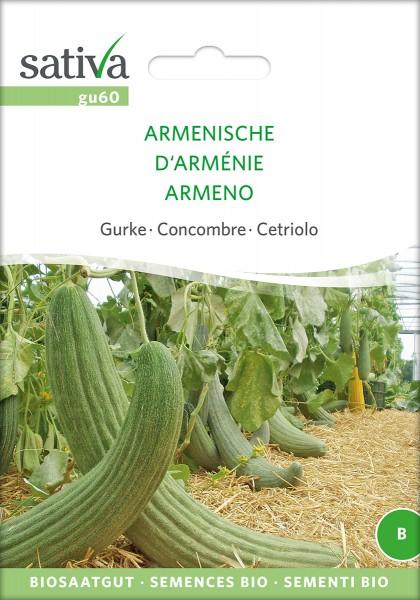 Armenische Gurke