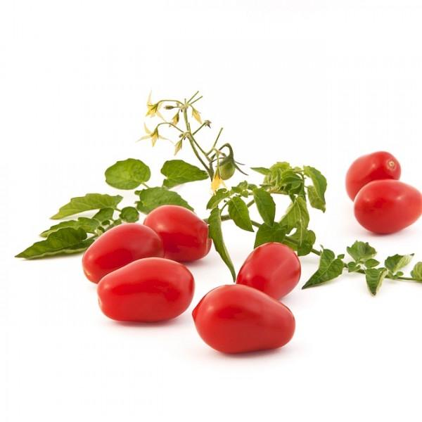 Salatparadeiser / Salattomate 'Naama'